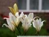 Примеры фотографий на Canon EF 70-210 F 4