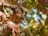 Фото на Canon EF 85mm 1:1.8 USM