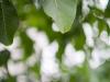Фото на Canon Lens FD 55mm f 1.2 S.S.C.