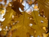 Пример фото на Nikon D3300