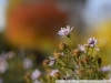Example photo on Nikon D3300