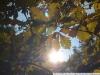 Nikon D7000 пример фото