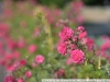nikon-24-120-f-4-vr-with-d750-sample-17