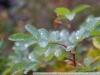 фотография на  Индустар-50 1:3,5 f=5см П