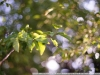 Фотография на Fujinon 55 mm f1.8