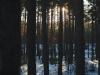 Пример фотографии на Carl Zeiss Jena Flexon F2 50mm