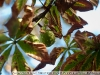 Примеры фотографий на Гелиос 44 2.8 50