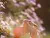 Пример фото на Hanimex Automatic  2.8 100 mm
