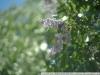 Гелиос-44 примеры фотографий на полноформатную камеру