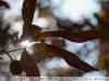 Фотографии на Гелиос 44М-6