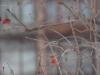 Фото на Индустар 61 ЛД 53 мм F 2.8