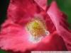 Пример фотографии на Индустар 61 Л Д