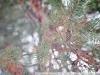 Пример фотографии на И23У 4.5 110