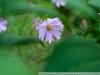Фото на Индустар-29 2.8 80мм