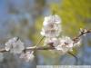 Фото на Industar-50-2
