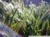 Пример фото на Индустар-50 и Sony a7r