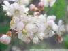 Пример фотографии на Индустар-50 3.5 50