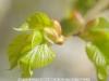 industar-50-3-5-reproduct-lens-7
