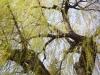 Примеры фотографий на ЮПИТЕР-12 1:2.8 F=3.5см П