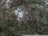 Фотография на Юпитер 37А МС-Н-30 3,5 135
