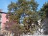 Пример фотографии на объектив Юпитер 8 с байонетом Контакс Киев