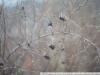 Примеры фотографий на ЮПИТЕР-8М 2 50 П