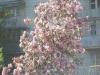 Пример фото с использованием МС КОНВЕРТЕР К-1 2х