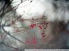 Пример фотографии на КО 120мм 2.1