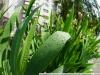 Пример фото с использованием Sony LA-EA4