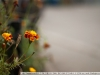 Фото на Leica Leitz Summicron R 2 50
