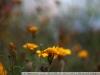 lФото на Leica Leitz Summicron R 2 50