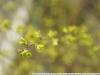 Minolta Maxxum Zoom AF Lens 28-85mm