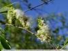 Фото с использованием Metabones EF - E