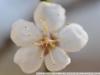 Фото на Nikon AF Micro 60 2.8D