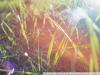 Примеры фотографий на МИР-1 2.8 37 АВТОМАТ