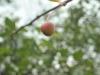 Мир 10 А 28 мм 3.5 пример фото