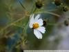 Фото на МС Волна 50 1.8