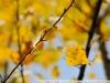 Примеры фотографий на Nikon AF Nikkor 35-105 mm 3.5-4.5 D MK3