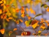 Пример фото на Nikon AF Nikkor 35-105 mm 3.5-4.5 D MKIII