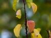 Фото на Nikkor-H F4.5 300mm