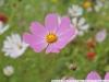 Пример фото на Nikon 1 J1