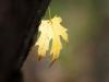 Фото на Nikon 105mm 2.5 Nikkor AI-s