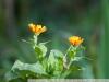Фотография на Nikon 105mm 1:2.5 Nikkor AI-s
