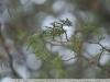 Примеры фотографий на Nikon AF 105 2.8 D Micro