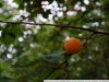Пример фото на Nikon 12-24 f4 G