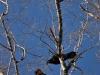 Примеры фотографий на Nikkor AF-S 16-85mm f3-5-5.6G ED VR DX Nikon