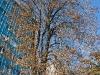 Фотографии на Nikon 18-135 f 3.5-5.6 ED-IF AF-S DX Zoom-Nikkor