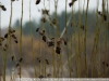 Фото на Nikon 18-200mm VR