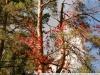 Пример фотографии на Nikon 18-200GII