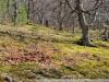Пример фото на Nikon DX AF-S Nikkor 18-55mm 1:3.5-5.6GII
